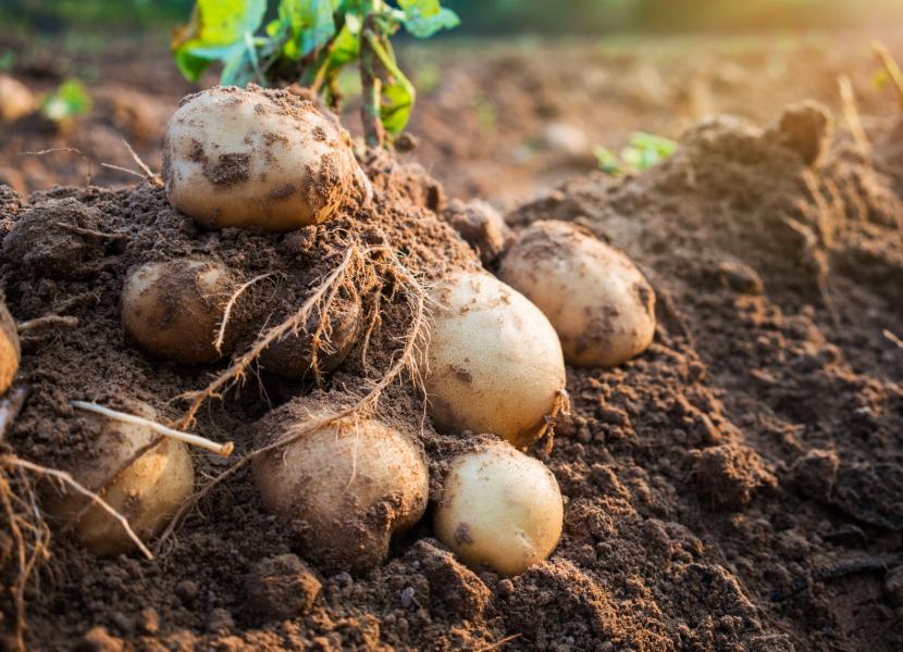 Kartoffeln Rezept Älplermagronen